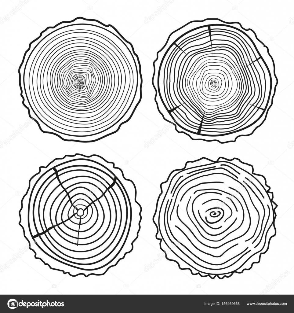 Ağaç Halkaları Kesit Kümesi Stok Vektör Mikabesfamilnaya 156469668