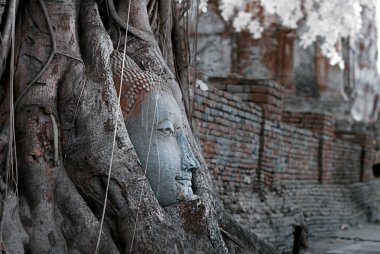 Ruin of buddha head statue in Ayudhaya Historical park, world heritage of Thailand, shooting style with filter infrared 72