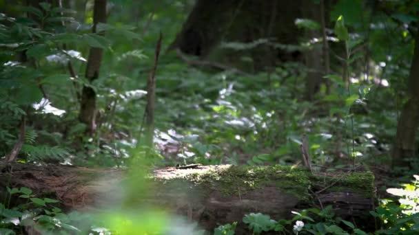 Nahaufnahme von zwei Paar Beine Wanderungen entfernt in einem Sommer Wald
