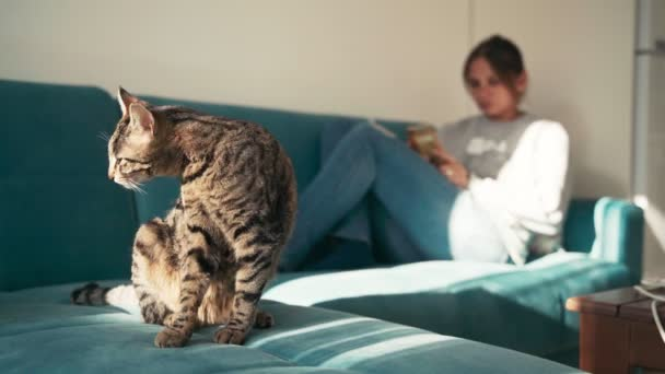 Cozy 4k footage. A young woman lying on the sofa with a tabby cat.