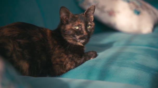 Gyönyörű vegyes színű macska, feküdt egy kék kanapén egy napsütéses napon.
