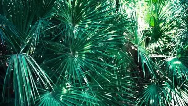 Detailní záběr na list tropické rostliny. Přírodní pozadí.