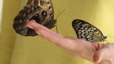 zár megjelöl szemcsésedik womans kezében, aki több lepkék nagy szárnyakkal