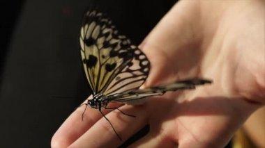 A pillangó ül a kezét, egy rovar szárnyak a szárnyait, és mozog a antennák
