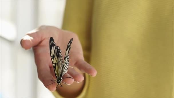 Zenske ruky je hospodářství velké černobílé motýl, detail
