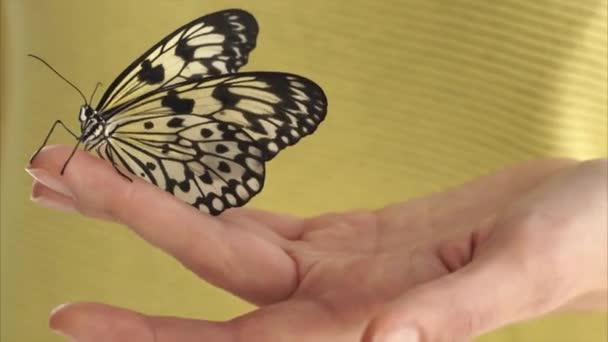 Nő a papír sárkány pillangó