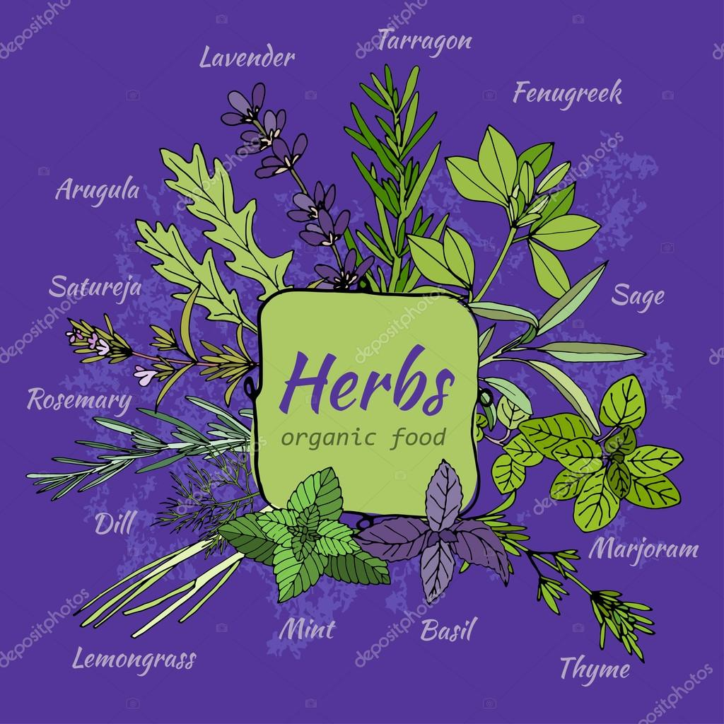 Set of hand draw herbs for food and cosmetic.