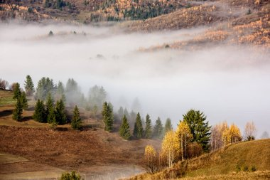 Beautiful morning landscape with trees in the fog. Foggy Autumn Landscape.