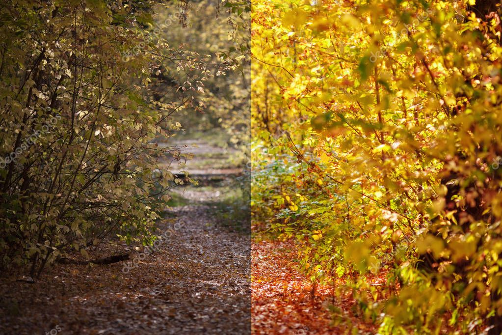 Photo before and after the image editing process. Autumn forest