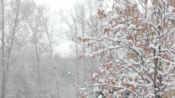 Snowflakes falling, snowfall. Scenic winter landscape. Trees and snow