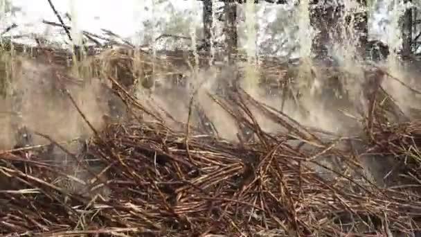 cukornád-line gyári termelés