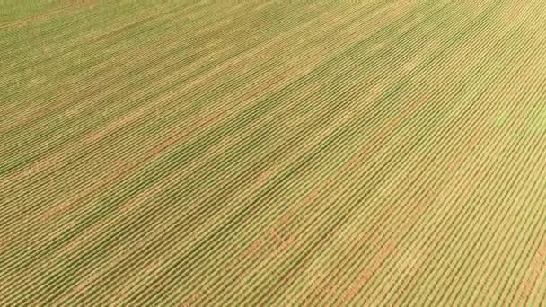 Arašídovou traktor sklizeň plantáže