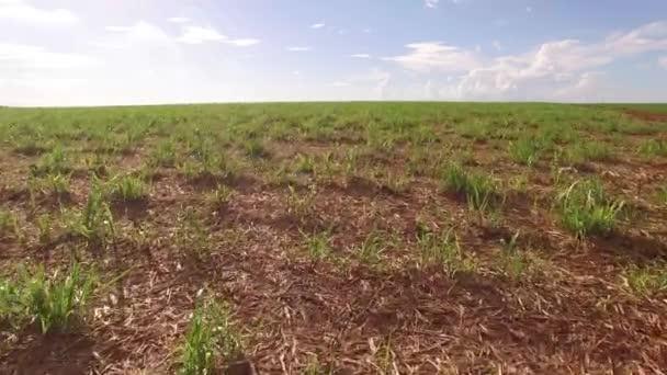 cukornád ültetvények mező légifelvételek