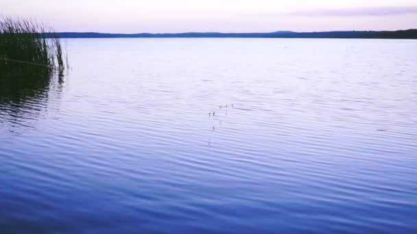Halász hozza férgek, mint a csali a hal-horog rúd