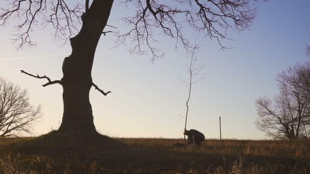 Muž na výsadbu strom v poli. Sunny východ slunce, západ slunce. Silueta. Jarní nebo letní