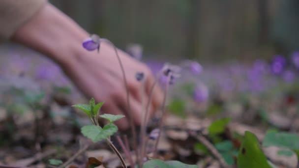 schönes junges Mädchen sammelt Wildblumen im Wald