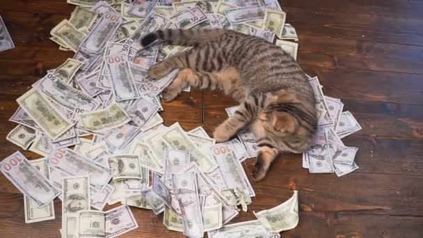 kočka z bohatých