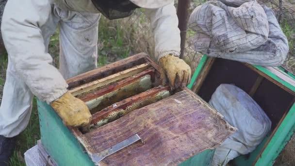 Méhek a méhsejt. Drágám harvest. Méhész méhek óvatosan eltávolítása a keretet. méhészet makró. HD