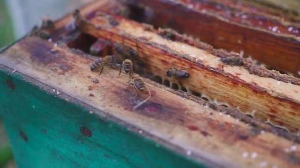 Bees on honeycomb. Beekeeper gently removes bees from the frame. apiary macro. slow motion