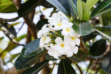 flowers on tropical tree