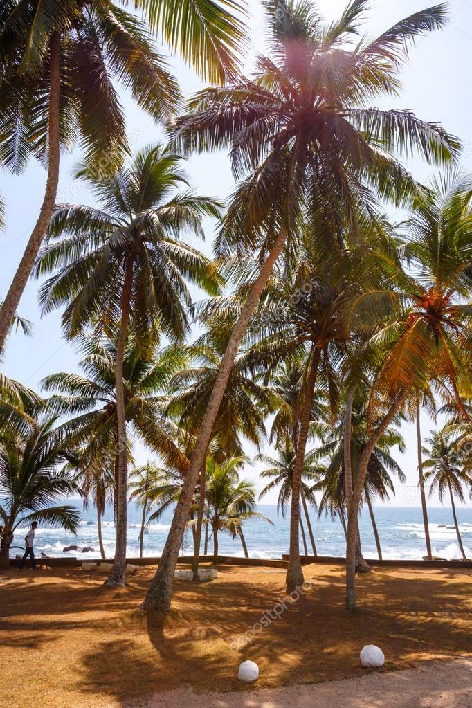 landscape with tropical beach