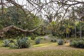 Fotografie Zelená příroda v botanické zahradě