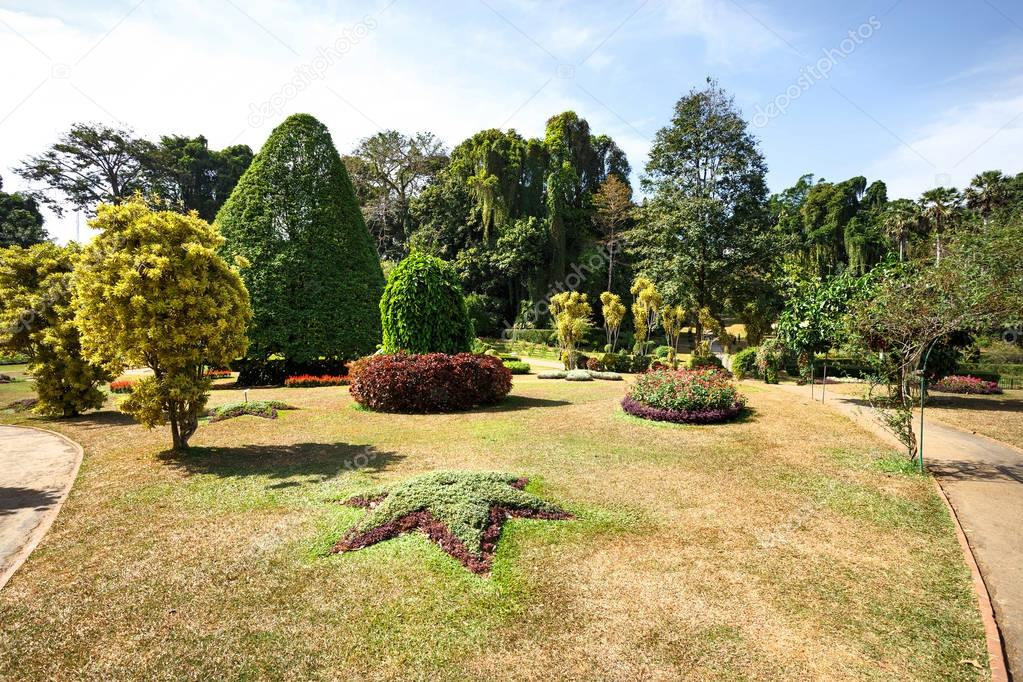 green nature in Botanical Garden