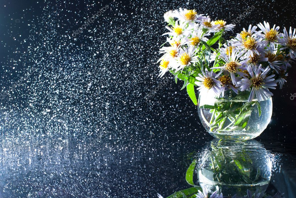 Purple Asters In A Glass Vase With A Circular Spray Of Water