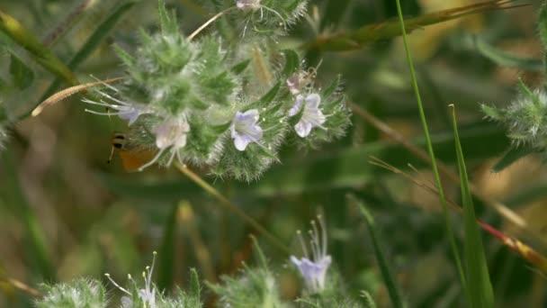 Žlutý motýl sedí na květy zelené keře v poli
