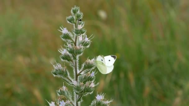 Bílý motýl sedí na květy zelené keře v poli