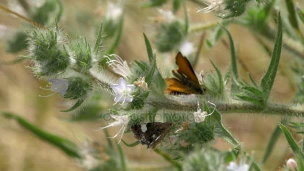 Malé létající můry získat pyl z květů zelené křoví v poli