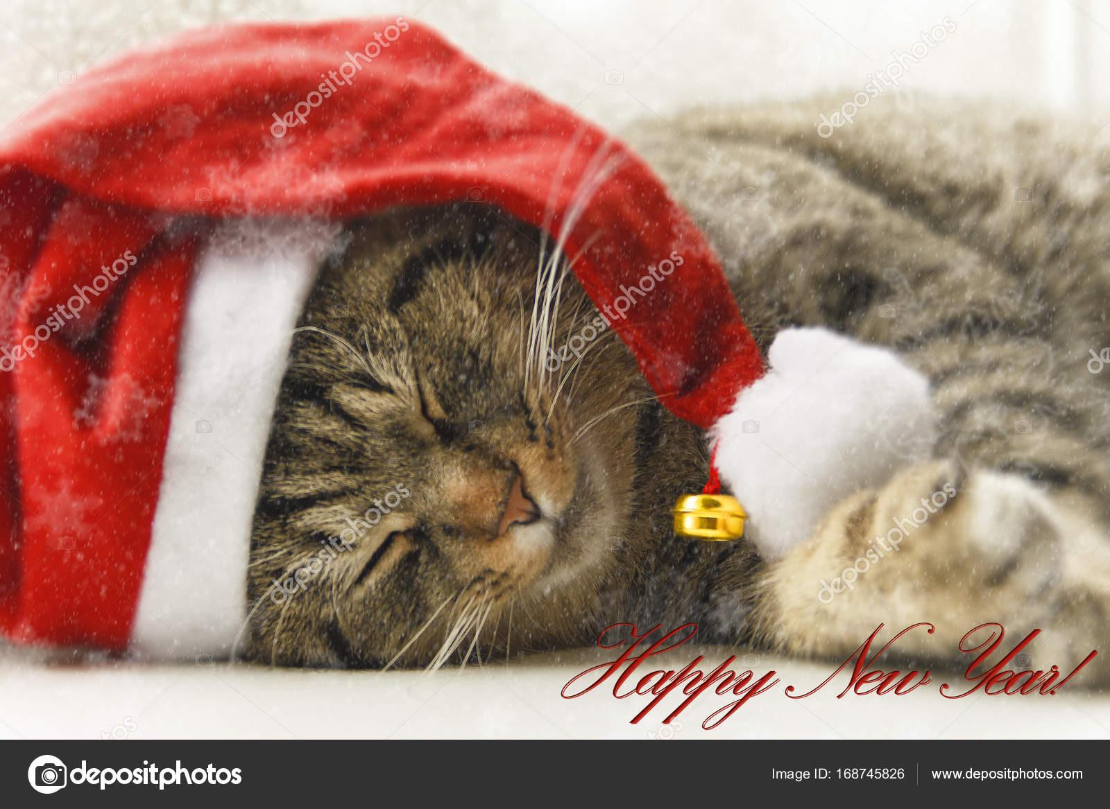 Joli chat dans le chapeau du père Noël. Chat habillé du père