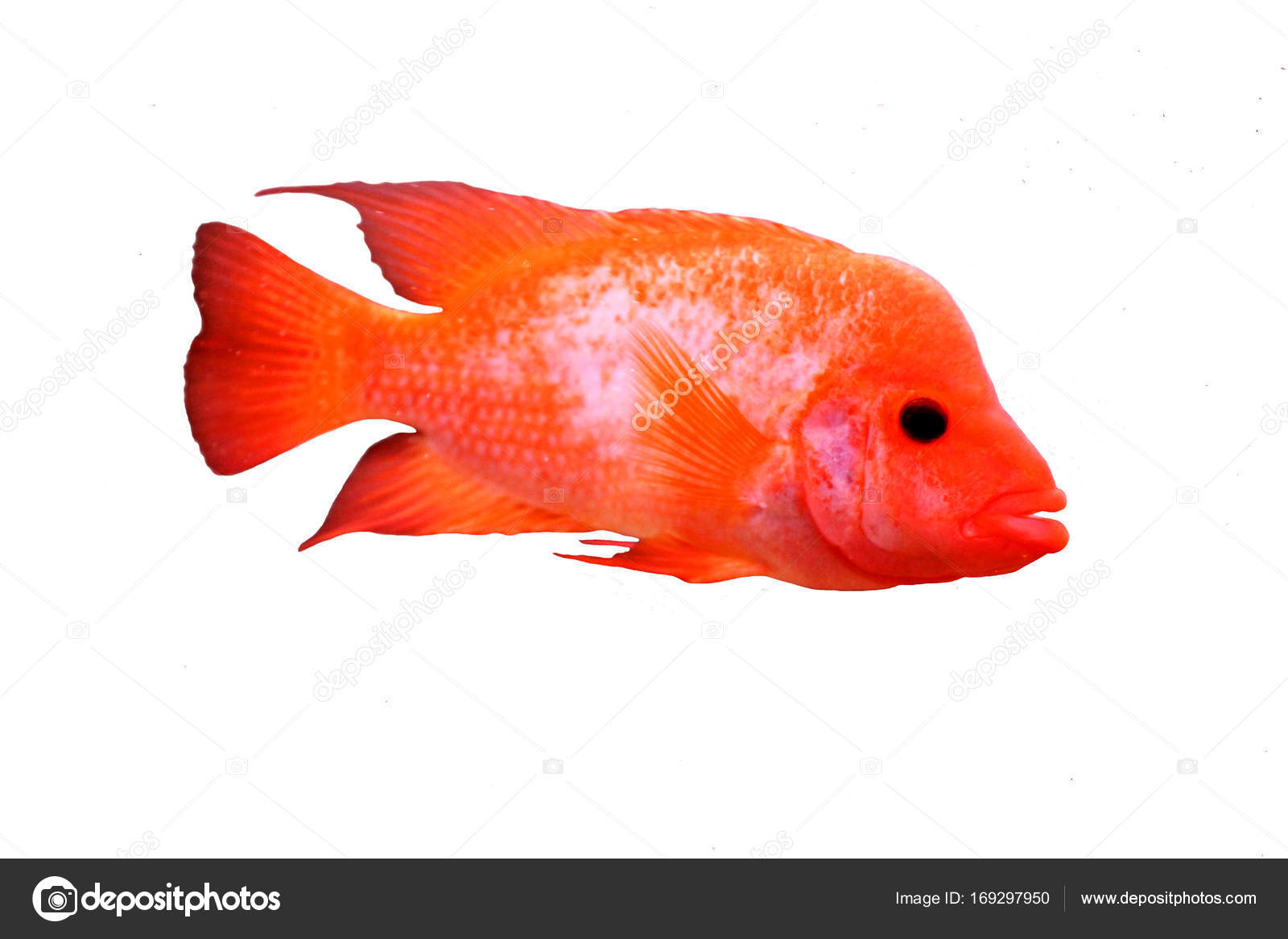 multi colored sea small fish — Stock Photo © vero_ro39 #169297950