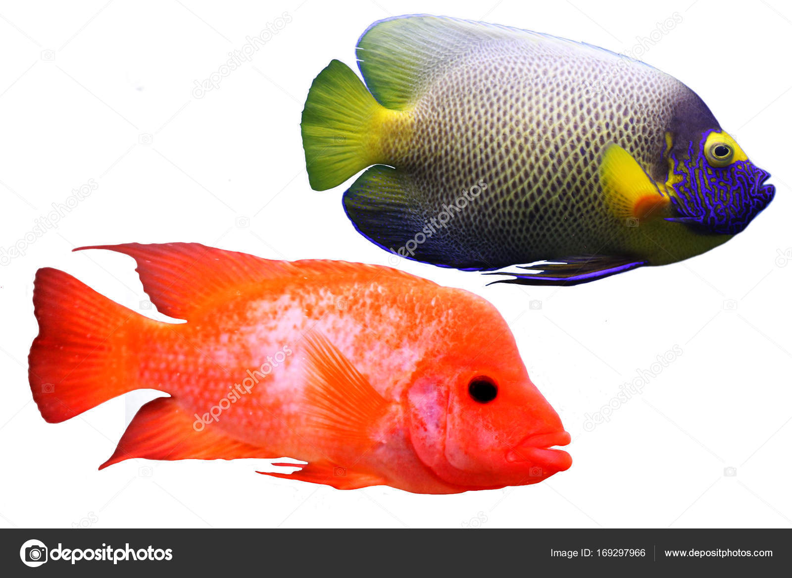 multi colored sea small fish — Stock Photo © vero_ro39 #169297966
