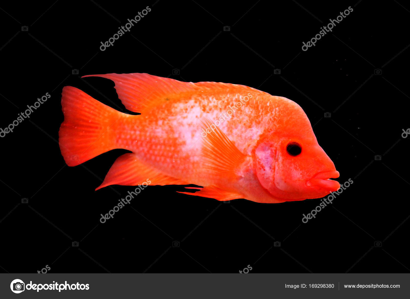 multi colored sea small fish — Stock Photo © vero_ro39 #169298380