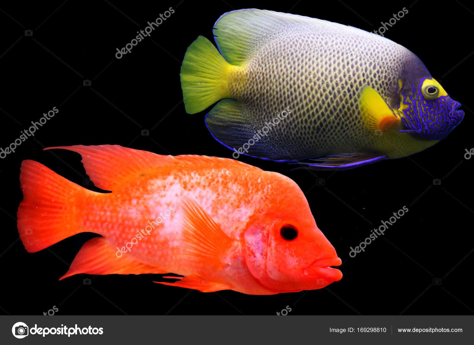 multi colored sea small fish — Stock Photo © vero_ro39 #169298810