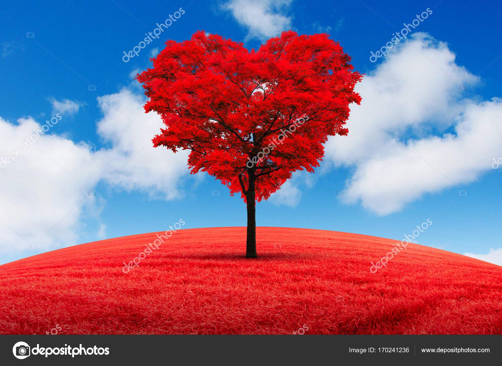 árbol Con Corazón Rojo árbol En Forma De Corazón Rojo En El Campo