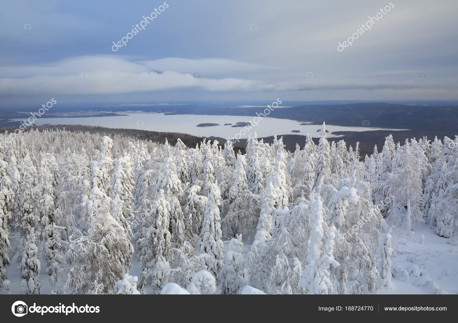雪に覆われた森のパノラマ。ロシ...