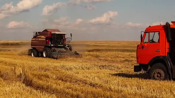 Harvesters and tractor working in the fields. Wheat.