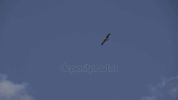 Der Adler schwingt sich in den klaren Himmel. Freiheit. Freiheit. Unabhängigkeit
