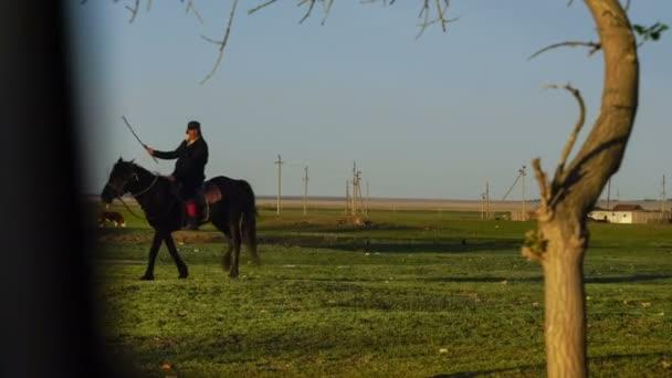Shepherd on horseback chases a herd of calves.