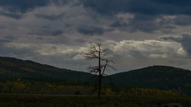 Wide shot of lonely dead tree against time lapse mountain highway and clouds floating by.