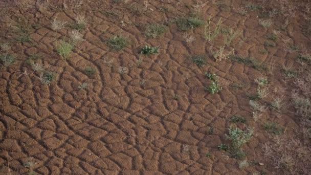 Roten Erde geknackt. Grünen Rasen. Bewegte Schatten