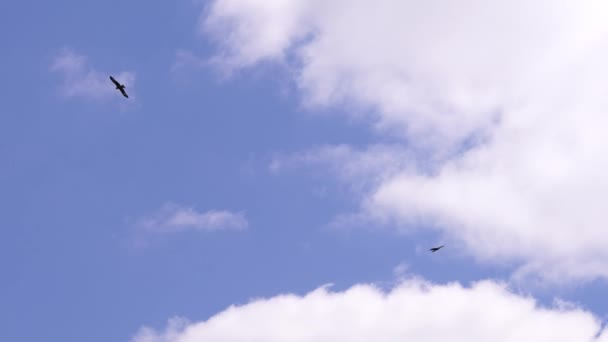 Two eagles are soaring in blue sky. Its eagles wings. Silhouette of birds flies. Freedom of nature is wild and colorful.