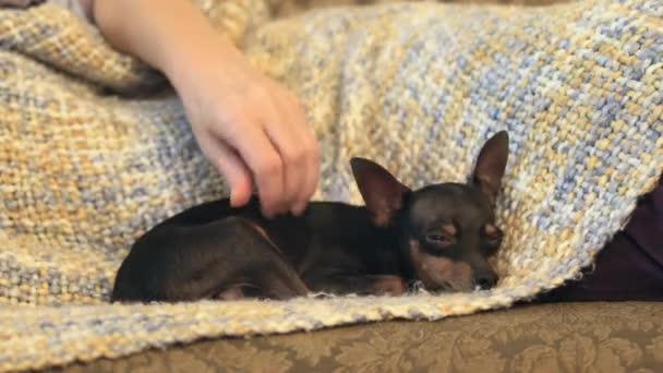 Žena mazlení malý pes, která leží nedaleko
