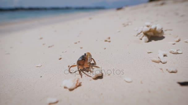 Ostrov Bali. Pláž. Členovců. Pod vodou a mořského života v Bali je uznáván jako jeden z nejbohatších na světě, s druhy, jako jsou korýši a houbovité.