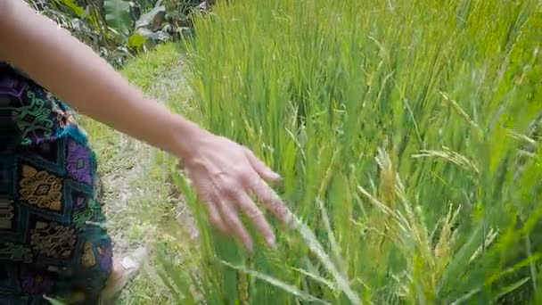 tall green grass field. Close Up Of Right Hand Young Girl Walking In The Meadow And Touching Tall Green Grass. Woman Strolling Through Wheat Rise Fields On Path Grass Field