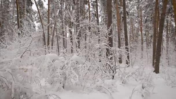 Chiuda in su del bellissimo paesaggio di neve-coperte di alberi nudi nella foresta di inverno. Eccellente congelati scenario della natura allaperto con cumuli di neve sullo sfondo