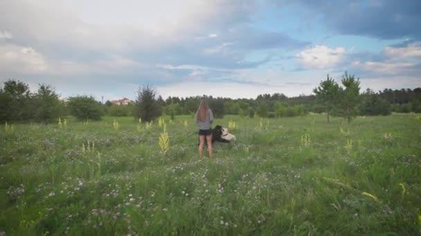 junge Frau geht mit zwei Hunden im grünen blühenden Feld am Sommerabend spazieren, Hunde spielen, schöner bewölkter Himmel im Hintergrund