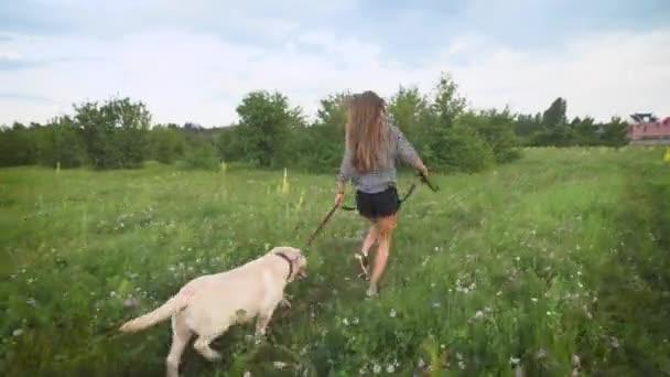Charmante junge Frau und weißer Labrador laufen im Sommer abends auf einem Feld in der Nähe von Hütten auf dem Land